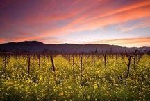 Napa Travel / Scenes from Napa, California
