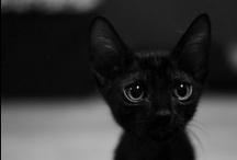 OMG Cute / by Alicia Kat Vancil