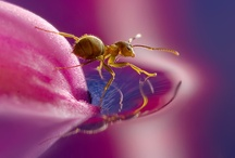 Macro Photography / by Tammy Lorch