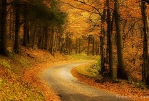 Autumn / by O KOREA