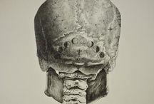•skulls•