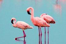 Flamingos / Crazy for Flamingos