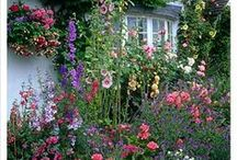 The Cottage Garden / A cottage garden adds the finishing touch to my precious cottage and guesthouses. / by Camille Nelson