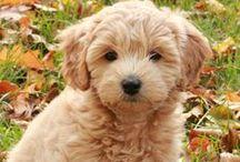 Puppy Love / by Aubrey Larson