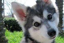 cute cute !!! >u<
