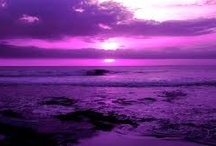 """My Purple Passion / I am a lover of all things in the purple color spectrum. Some have said I am a """"Purpleologist"""" -- a lover of purple. I gladly accept that name. / by Dianne Kelley"""