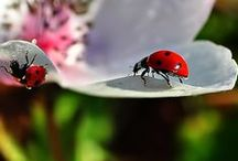 Lady Bugs / by Erin O'Keefe