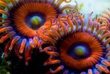 Ocean/Sea Creatures and Things / by Terri Escobedo