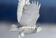 Birds / by Andrea Eskuche