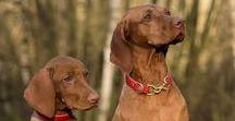 Education canine / L'éducation canine est important pour vivre en harmonie avec son chien. My-Animalerie.com vous propose des accessoires pour apprendre à vivre ensemble tout en douceur à votre chien.