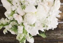 Floral / by Paper & Parcel