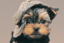 i feel the need for tweed!