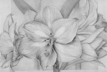DIBUJOS y obra by Marta Chirino / Dibujos hechos a mano por artistas españolas de gran experiencia, con motivos botánicos.
