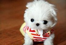 Cute Animals / The cutest animals you will ever see, pet photography, photos and illustrations of animals.