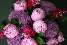 Fiori, Flowers, Blumen / by Angie Cucco