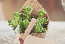 Farm to Table Weddings / by Party Plus Tents + Events