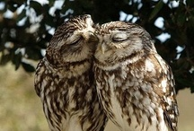 Owl Always Love You / by Candy Selvey