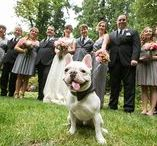 Wedding Dogs + Cats / Pets in weddings are always the cutest. Check out these fun wedding dogs and cats, shot by Soper Photography.