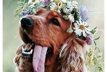 Dogs in Weddings / Dogs in wedding ceremony ideas, pictures, and how to incorporate dogs in your wedding, dog of honor, dog ring bearer, dog outfits for weddings.