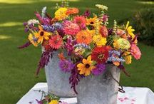 flowers, plants and containers