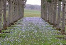violets / by Elizabeth Harris