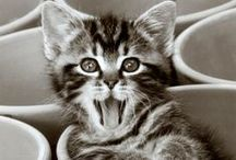 Cuteness + Coffee / Puppies and kittens with coffee, too adorable. Melitta.com.