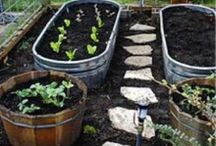 Container Gardening / by Rachel Boykin