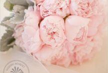Wedding fairytale / by Casey Hazlewood
