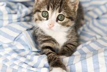 Cute little animals / by Casey Hazlewood