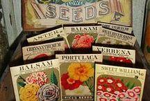 Seed Box Displays and Graphics