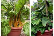 Vegetables in Mpumalanga