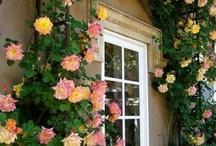 Gardening / by Carolyn Martin