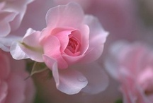 My Passion For Pink / Dedicated to my love of the color PINK / by Janelle Ratzlaff Cramer