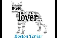I love Boston (Terriers) / by Julie Porter