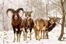 Animals of Slovakia