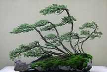 bonsai / miniature trees also kmown as bonsais