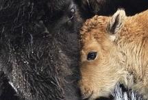 Animals :D / by Julia Seydel
