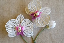 Pictures about Phal orchid (butterfly orchid)