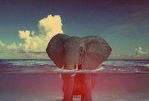 Lions & Elephants / by Chandler Robertson