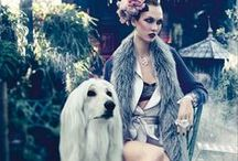 Pow Wow / Every Cute Dog :: Dog Fashion