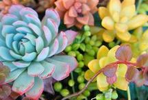 sweet succulents / Colorful and exotic succulents and cacti