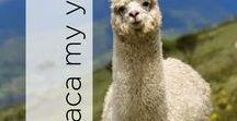 Alpaca My Yarn
