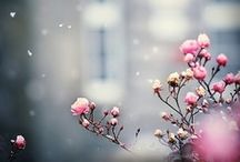 colors. pink. / by Minttu L.