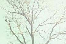 colors. mint. / by Minttu L.