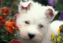 Pet Products & Services We Love / by All God's Creatures Pet Services