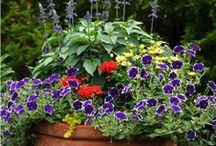 Free DIY Container Garden and Planter Guides / Create beautiful gardens in small spaces. Have pretty potted plants indoors, or on your porch, deck, patio or balcony.  Build your own wooden planters. Make attractive and unusual garden pots and containers for the nooks and barren spaces in your yard, home or apartment.  Pin the good ideas and advice that you find here to your own board, so you'll have it whenever you want it. / by Don @ Today's Plans