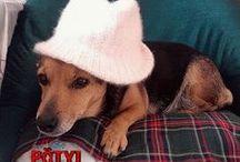 Pötyi kutyáról és egyéb kutyusokról készült képek / Kutyusokról készült képek.
