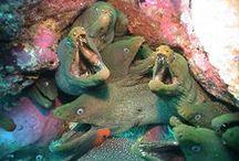 mermaidfeels