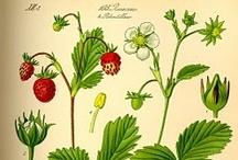 Food botanics