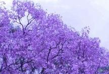 I didn't like purple until Pinterest !